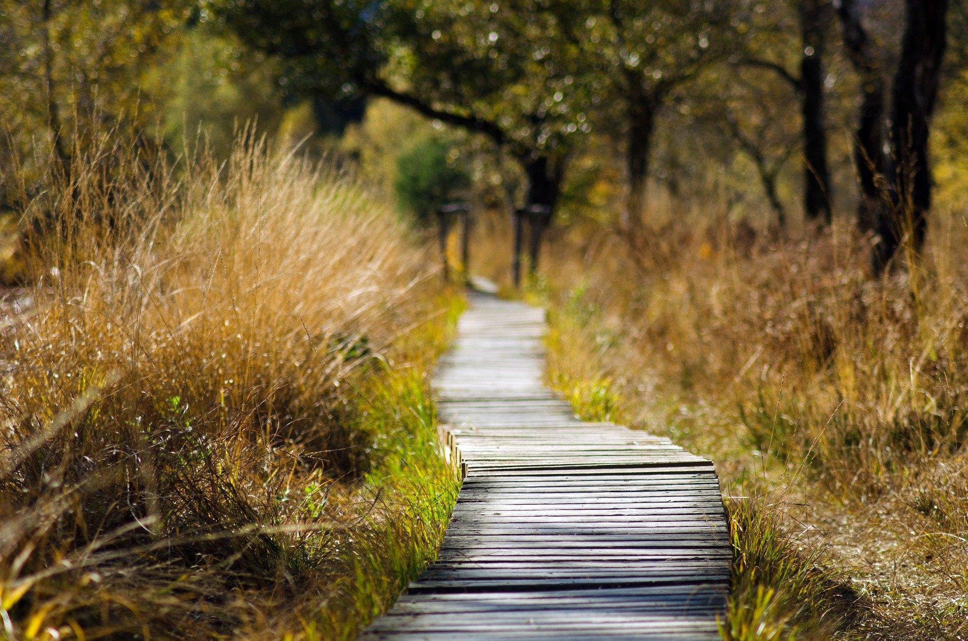 Action Sociale: randonnées gratuites en Ile de France